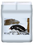 Gentoo Penguin On Nest Duvet Cover