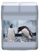 Gentoo Penguin With Chick Begging Duvet Cover