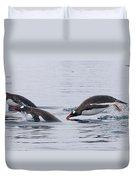 Gentoo Penguins Porpoising Paradise Bay Duvet Cover