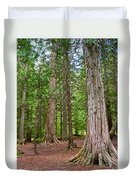 Giant Cedars On Trail Of The Cedars In Glacier Np-mt Duvet Cover