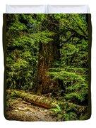 Giant Douglas Fir Trees Collection 3 Duvet Cover