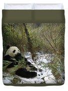 Giant Panda Eating Bamboo Wolong China Duvet Cover
