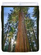 Giant Sequoia Trees Of Tuolumne Grove In Yosemite National Park. Duvet Cover