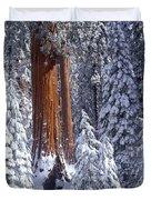 Giant Sequoia Trees Sequoiadendron Duvet Cover
