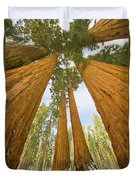 Giant Sequoias And First Snow Duvet Cover by Yva Momatiuk John Eastcott