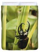 Giant Three-horned Beetle Duvet Cover