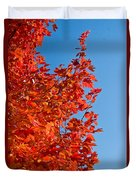 Glowing Fall Maple Colors 1 Duvet Cover