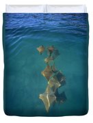 Golden Cownose Rays Schooling Galapagos Duvet Cover