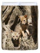 Golden Jackal Canis Aureus Cubs Duvet Cover