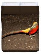 Golden Pheasant Male Duvet Cover