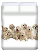 Golden Retriever Puppies, In A Line Duvet Cover