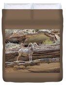 Grand Canyon Big Horn Sheep Duvet Cover