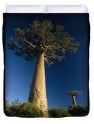 Grandidiers Baobab Trees Madagascar Duvet Cover