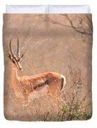Grant's Gazelle Nanger Granti Duvet Cover