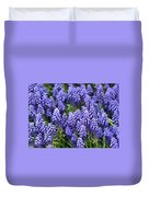 Grape Hyacinth At Thanksgiving Point - 1 Duvet Cover