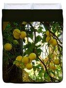 Grapefruits Duvet Cover
