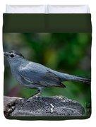 Gray Catbird Dumetella Carolinensis Duvet Cover