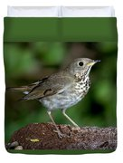 Gray-cheeked Thrush Catharus Minimus Duvet Cover