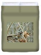 Gray Squirrel - Sciurus Carolinensis Duvet Cover
