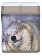 Gray Wolf Canis Lupus Shaking Snow Off Duvet Cover