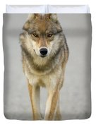 Gray Wolf Denali National Park Alaska Duvet Cover