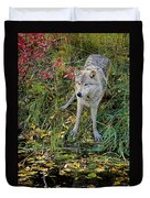 Gray Wolf Drinking Duvet Cover
