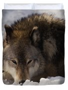 Gray Wolf In Snow Duvet Cover