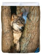 Gray Wolf In Tree Canis Lupus Duvet Cover