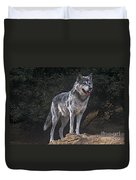 Gray Wolf On Hillside Endangered Species Wildlife Rescue Duvet Cover