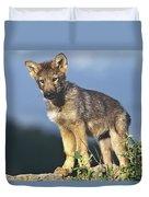 Gray Wolf Pup Montana Duvet Cover