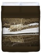 Gray Wolf Reflection Duvet Cover