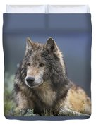 Gray Wolf Resting North America Duvet Cover