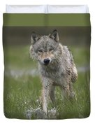 Gray Wolf Walking Through Water Duvet Cover