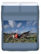 Great Frigatebird Female Eyes Courting Duvet Cover