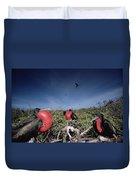 Great Frigatebird Males In Courtship Duvet Cover