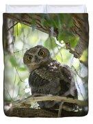 Great Horned Owl Fledgling  Duvet Cover