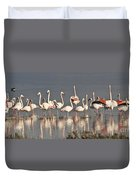 Greater Flamingos At Laguna De La Fuente De Piedra Duvet Cover