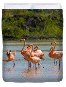 Greater Flamingos Duvet Cover