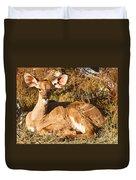 Greater Kudu Calf Duvet Cover