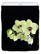 Green And Wine Hybrid Phalaenopsis Orchid Duvet Cover