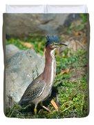 Green-backed Heron Butorides Virescens Duvet Cover