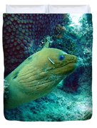 Green Moray Eel With Cleaning Fish Duvet Cover