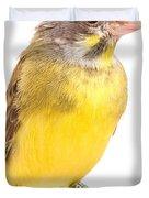 Green Singing Finch Crithagra Mozambicus Duvet Cover