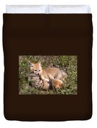 Grey Fox Kitts At Play Duvet Cover
