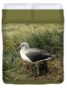 Grey-headed Albatross Nesting Chile Duvet Cover