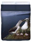 Grey-headed Albatrosses At Nest Site Duvet Cover