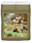Grey Jay Perisoreus Canadensis Watching Perched Duvet Cover