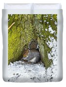 Grey Squirrel With Its Food Store Duvet Cover