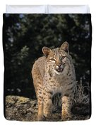 G&r.grambo Mm-00006-00275, Bobcat On Duvet Cover