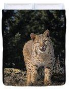 G&r.grambo Mm-00006-00275, Bobcat On Duvet Cover by Rebecca Grambo